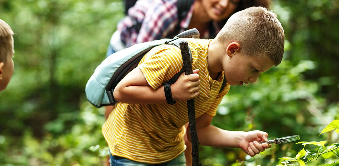 Boy using magnifying glass and looking at insects